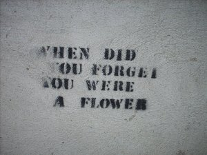forget flower